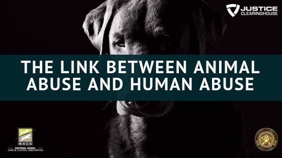 the-link-between-animal-abuse-and-human-abuse-1