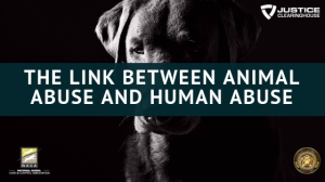 the-link-between-animal-abuse-and-human-abuse-1