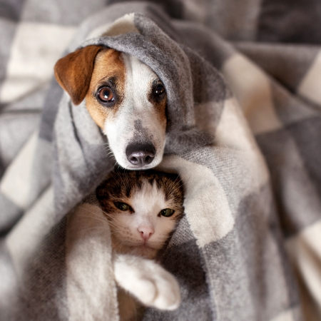scared dog abd cat shutterstock_726710044